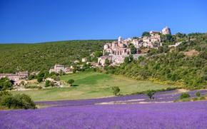 Picture field, flowers, France, lavender, Provence, Simian-La-Rotonde