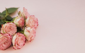 Picture roses, bouquet, Pink, Petals, Beautiful, Beautiful