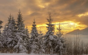 Picture winter, forest, the sky, the sun, clouds, light, snow, sunset, mountains, branches, clouds, nature, the …