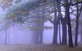 Picture autumn, forest, trees, branches, fog, Park, branch, trunks, foliage, morning, haze, alley, falling leaves, oaks, …
