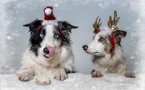 Picture dogs, holiday, friends