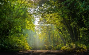 Picture road, greens, forest, light, trees, fog, Park, branch, haze, crown