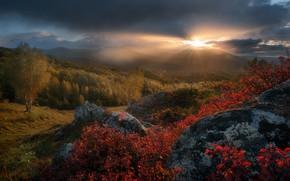 Picture autumn, forest, the sun, rays, trees, sunset, hills, Paul Kalinenko
