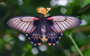 Picture macro, background, pattern, butterfly, wings, insect, bokeh