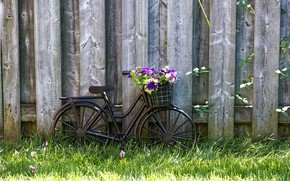 Picture wallpaper, grass, bicycle, bike, wood, flowers, basket, lawn, vintage style