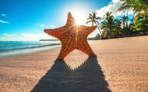 Picture the sun, rays, tropics, palm trees, the ocean, shore, star, shadow, Valentin Valkov