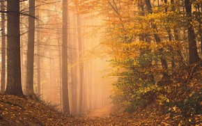 Picture autumn, forest, photo, trail, the ravine