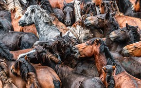 Picture horses, horse, the herd