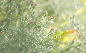 Picture greens, flower, glare, mood, texture, Boke