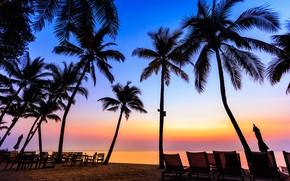 Picture sea, beach, summer, sunset, palm trees, shore, silhouette, summer, beach, sea, sunset, seascape, beautiful, paradise, ...