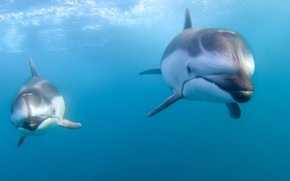 Picture the ocean, dolphins, a couple