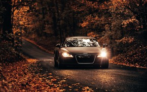 Picture road, car, machine, autumn, Audi, Audi, Audi R8, brown, road, Roberto Nickson