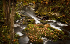 Picture autumn, leaves, branches, stones, tree, foliage, waterfall, falling leaves, autumn leaves