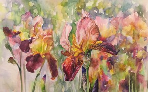 Picture flowers, watercolor, painting, irises, the work of Irene Michel