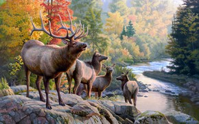 Picture autumn, forest, nature, pose, river, stones, shore, foliage, figure, picture, art, haze, painting, deer, pond, …