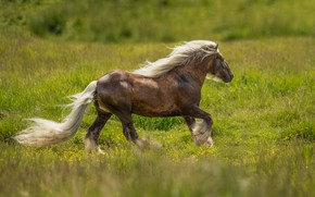 Picture grass, horse, horse