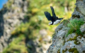Picture flight, stones, background, rocks, bird, wings, slope, stalled, flies, the rise, bokeh, blurred, the scope, …