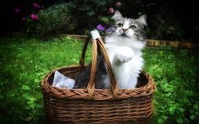 Picture cat, summer, cat, pose, glade, basket, foot