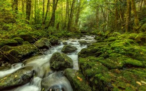 Picture Stream, Trees, Stones, Moss, Rapids, Forest Stream
