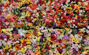 Picture flowers, bright, Lily, roses, chrysanthemum, flower carpet, a lot, different, bouquets, abundance