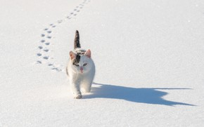 Picture winter, cat, cat, snow, traces, shadow, cat
