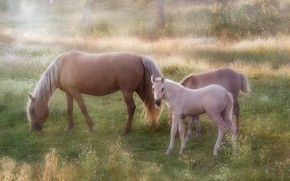 Picture horses, horse, foal, grazing