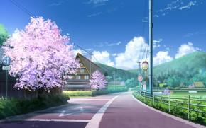 Picture Road, Spring, Sakura, Street