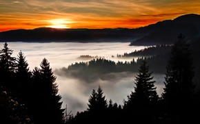 Picture forest, the sky, the sun, clouds, trees, sunset, fog, silhouette