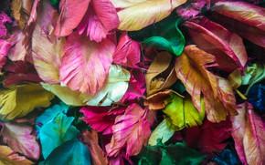 Picture leaves, petals, colorful, dry, leaves, purple, petals