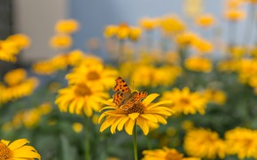 Picture summer, macro, flowers, nature, butterfly, yellow, garden, insect, a lot, bokeh, blurred background
