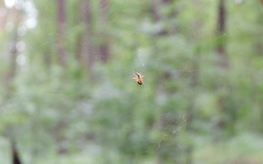 Picture forest, green, web, spider