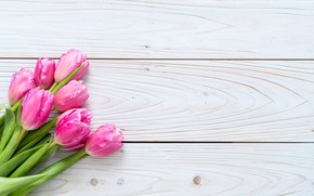 Picture background, pink, bouquet, tulips