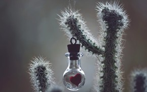 Picture heart, cactus, Bank