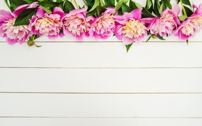 Picture flowers, pink, wood, pink, flowers, beautiful, peonies, peonies