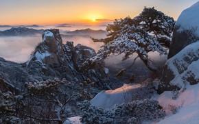 Picture winter, clouds, snow, trees, landscape, mountains, nature, fog, sunrise, rocks, dawn, morning, pine, Korea, reserve, …