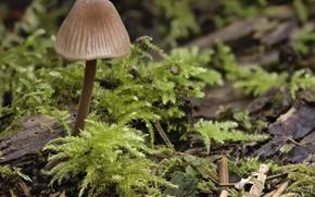 Picture macro, mushroom, moss, Martin Dollenkamp