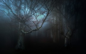 Picture autumn, forest, nature, the darkness, haze