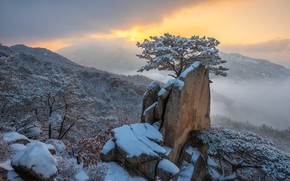 Picture winter, clouds, snow, landscape, mountains, nature, fog, tree, rocks, dawn, morning, forest, pine, South Korea, …