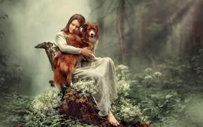 Wallpaper forest, trees, model, stump, Girl, dog, sitting