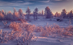 Picture winter, frost, forest, the sky, clouds, light, snow, landscape, nature, in the snow, snow, winter, …
