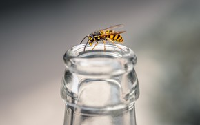 Picture macro, bottle, insect