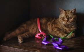 Picture cat, red, tape