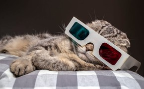 Picture cat, cat, face, blue, red, pose, grey, background, cell, paws, fold, glasses, bed, lies, striped, …