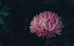 Picture Nature, Flower, Plant, Plants, Nature, Beautiful, Flower, Flora, Plants, Blooming, Bloom, Flora, Plant, Close-Up, Irina …