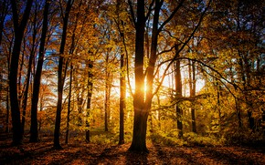 Picture autumn, forest, light, trees, branches