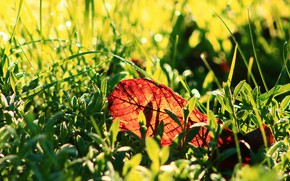 Picture grass, light, bokeh, autumn leaf