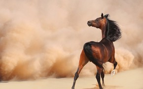 Wallpaper sand, look, face, nature, pose, background, horse, the wind, desert, horse, back, stallion, dust, turn, ...