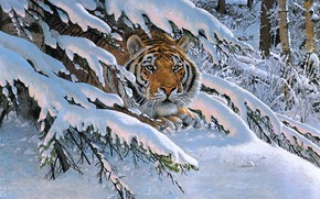 Picture winter, forest, look, face, snow, branches, tiger, pose, figure, spruce, picture, art, the snow, painting, …