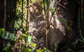 Picture tree, baby, leopard