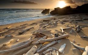 Picture beach, stones, coast, UK, driftwood